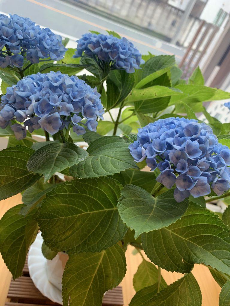 モデルハウス 紫陽花