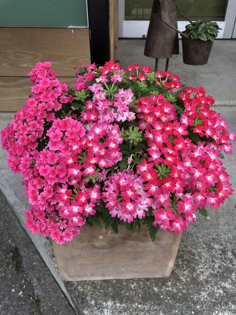 4月イベントのプレゼント用お花がモリモリです